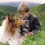 los-perros-famosos-del-cine