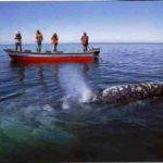 escapes-ver-ballenas-en-baja