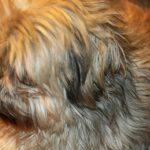 los-perros-sueltan-mas-pelo