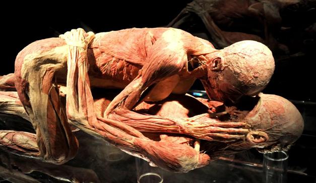 Fascínense conociendo el cuerpo humano - Chilango