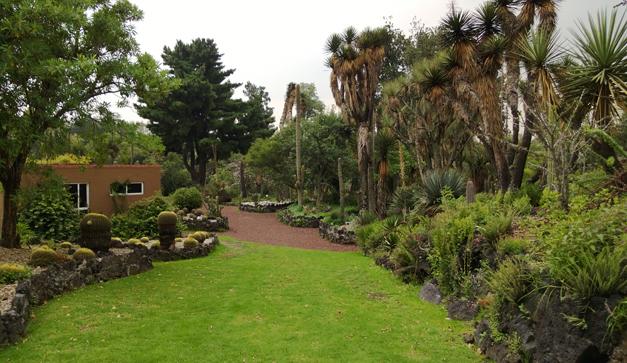 Visiten el jard n bot nico de la unam chilango for Jardin botanico el ejido