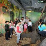 exploren-el-arbol-ramon-de-papalote-museo-del-nino