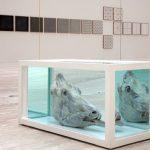 4-exposiciones-hechas-con-animales-en-el-df