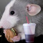 la-rata-en-la-hamburguesa-de-mcdonalds-fue-sembrada