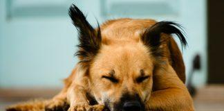 crematorios para mascotas en la CDMX
