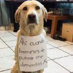 letreros-honestos-de-tus-mascotas