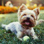 cuida-mi-mascota-el-airbnb-para-gatos-y-perros
