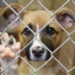 manada-san-un-lugar-donde-rescatan-y-cuidan-a-perros-maltratados