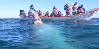 Viaje para ver a la ballena gris en Baja California