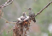 Pájaros CDMX
