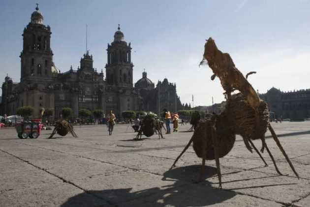 Hormigas gigantes Zócalo