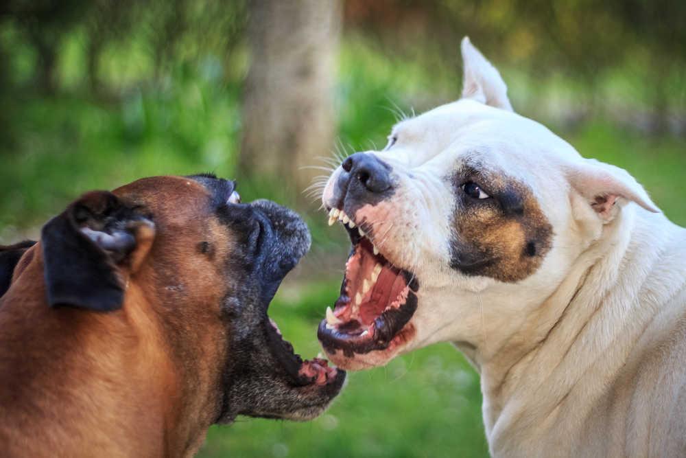 Cárcel para quien organice o vea peleas de perros