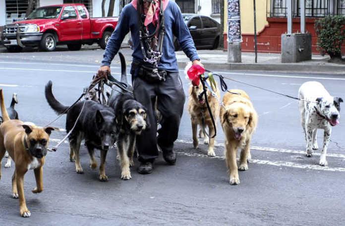 confesiones de un paseador de perros