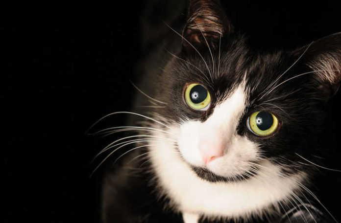 expo gatito