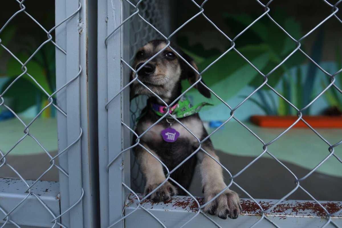 Abren albergue para perros rescatados en Ciudad de México