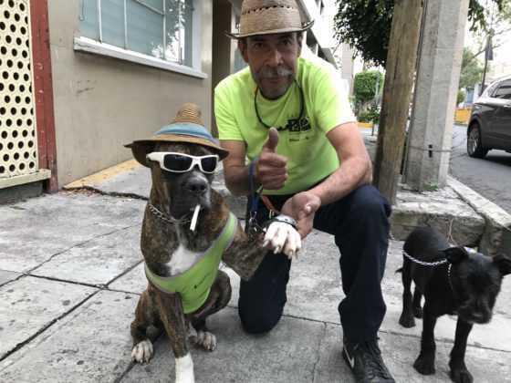 Zeus, el perro de Tacubaya
