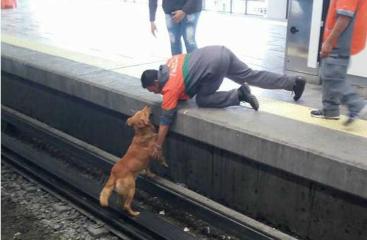 Causa indignación muerte de perro en metro Pantitlán