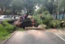 árbol caído Mariano Escobedo
