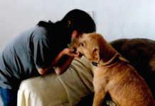 «Sólo con cariño y confianza se puede rehabilitar a un animal tan violentado»