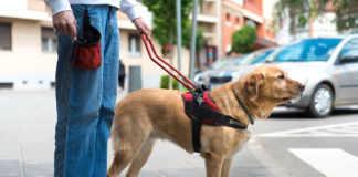 Uber perro guía