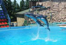 Las multas por el uso de delfines irán desde mil 500 hasta 300 mil 960 pesos.