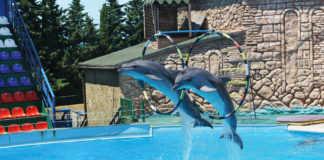 animales marinos en espectáculos