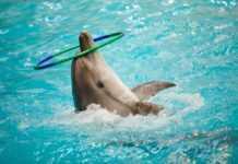 En la ciudad solo hay cuatro delfines, todos están en Six Flags