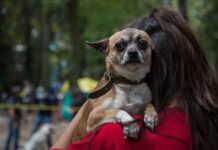 En este tiempo, las mascotas también necesitan víveres y cuidados especiales