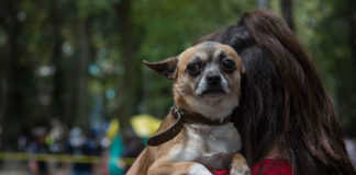 perritos rescatados del 19s