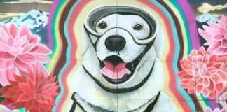 Frida perra rescatista mural