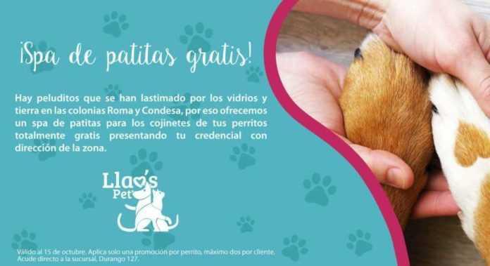 spa gratuito para perros
