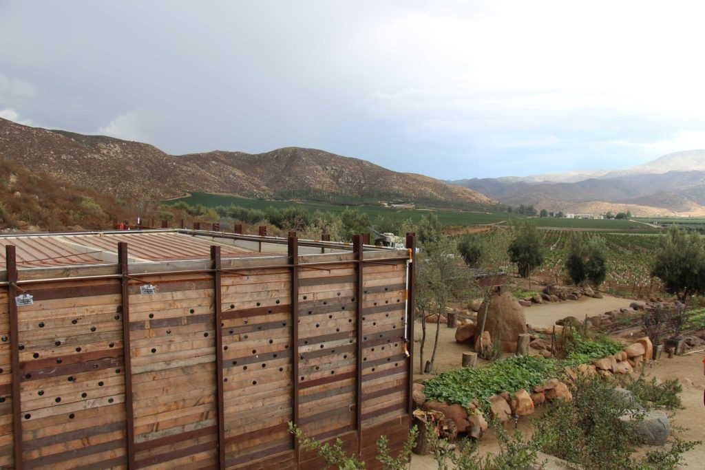 Bruma en Valle de Guadalupe