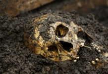 Según el Código Penal, el castigo por robar huesos puede ir de prisión de tres días a dos años o de 30 a 90 días multa.