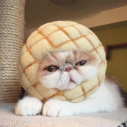 tortas de concha