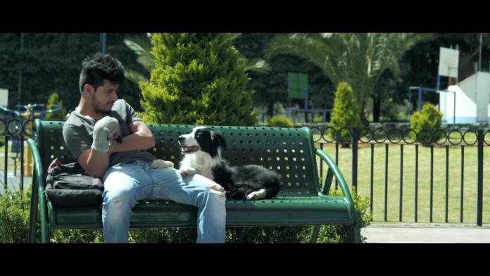 Cometa. Él, su perro y su mundo