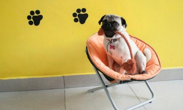 actividades para mascotas en la CDMX