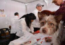 Así puedes adoptar un perro rescatado del Metro de la Ciudad de México.