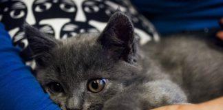vivaaerobus pierde a un gato