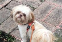 perrito de 30 mil pesos