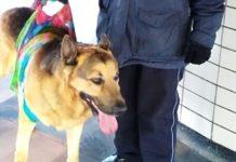 perro rescatado en la Línea A