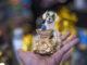amuleto de frida rescatista