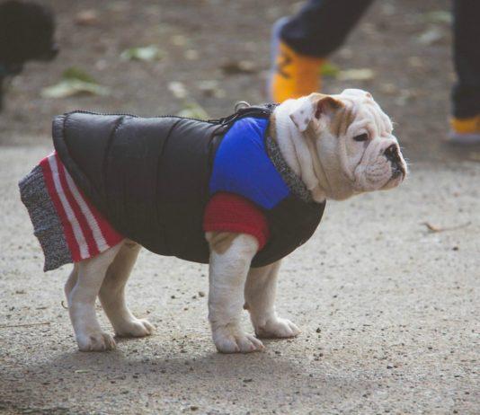 Las bajas temperaturas continuarán en la Ciudad de México y los animales lo saben. Checa cómo puedes proteger a tu mascota del frío.