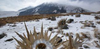 dónde ver nieve cerca de la cdmx