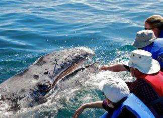 lugares para ver ballenas