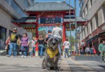 El Año Nuevo Chino en la CDMX inició con muchas actividades en el Barrio Chino y hasta con amuletos de la perrita Frida.