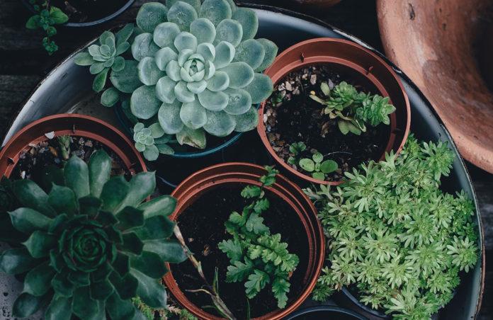 Adopta plantas en la UNAM