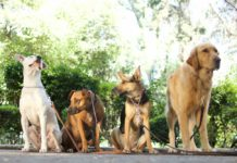 curso de entrenamiento canino en la UNAM