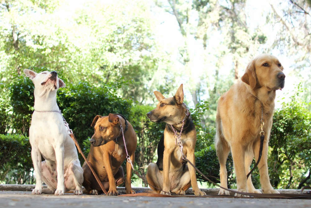 Resultado de imagen para adiestramiento canino