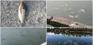 peces en chapultepec