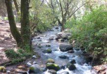 Los trabajos de saneamiento y rescate del Río Magdalena por fin concluyeron. Éste es el último río vivo de la Ciudad de México.
